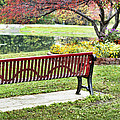 Park Bench By The Pond by Cricket Hackmann