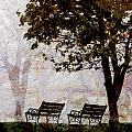Park Benches Square by Carol Leigh