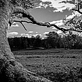 Park In Black And White by Charlene Gauld