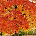 Park In Fall by Yoshiko Wootten
