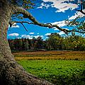 Park In Massachusetts In The Fall by Charlene Gauld