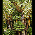 Park Palms by Larry White