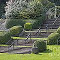 Park Stairs by Lee Serenethos