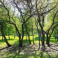 Park Trees by Konstantin Sutyagin