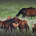 Parker Ranch Horses by Lori Seaman