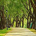 Parkway Among Trees by Eduard Isakov