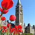Parliament Hill, Ottawa by Hafiz Ashna