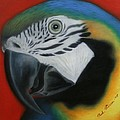 Parrot 1 by Paul Riesser