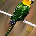 Parrot Beauty Digital Artwork by Georgeta Blanaru