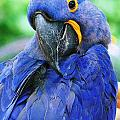 Parrot by Gayle Miller