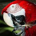 Parrot by Jason Khan