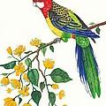 Parrot by Margaryta Yermolayeva