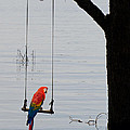 Parrot On A Swing by Les Palenik