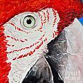 Parrot by Paola Correa de Albury
