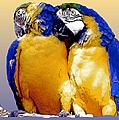 Parrot Passion 1 by Linda  Parker