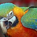Parrot by Scott Staley