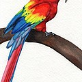 Parrot by Stephanie Arbore
