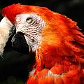 Parrot by TouTouke A Y
