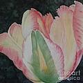 Parrot Tulip by Lynn Quinn