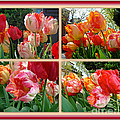 Parrot Tulips In Springtime Philadelphia by Mother Nature