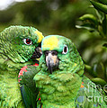 Parrot Whispers by James Brunker