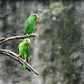Parrots In The Rain by Bob Hislop