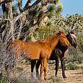 Partners - Wild Horses by Wolfgang Hauerken