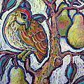 Partridge In A Pear Tree 1 by Ande Hall