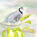 Partridge In A Pear Tree by Laurel Best