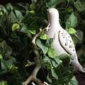Partridge In The Ivy by Tom Mc Nemar