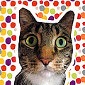 Party Animal - Smaller Cat With Confetti by Linda Woods