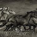 Paso Peruvian Horses On The Run by Priscilla Burgers