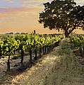 Paso Vineyard  by Sharon Foster