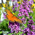 Passion Butterfly by Deena Stoddard