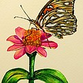 Passion Butterfly On Zinnia by Zina Stromberg