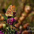 Passion Butterfly by Robert Bales