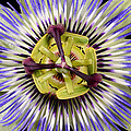 Passion Flower-0008 by Russ Greene