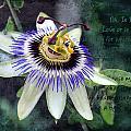 Passion Flower 1 by Helene U Taylor