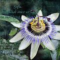 Passion Flower 2 by Helene U Taylor