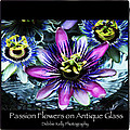 Passion Flower Poster by Debbie Kelly
