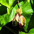 Passion Fruit 10-18-13 By Julianne Felton by Julianne Felton