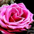 Passionate Rose by Mariola Bitner