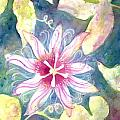 Passionflower by Kelly Perez