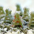 Pasta Christmas Trees by Iris Richardson