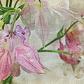 Pastel Columbines by Peggy Collins