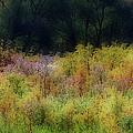 Pastel Field by Vickie Szumigala