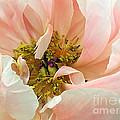 Pastel Floral by Kaye Menner