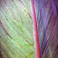 Pastel Leaf Detail by Tim Hester