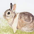 Pastel Pet Rabbit by Kate Sumners