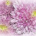 Pastel Pink Mums by Kaye Menner